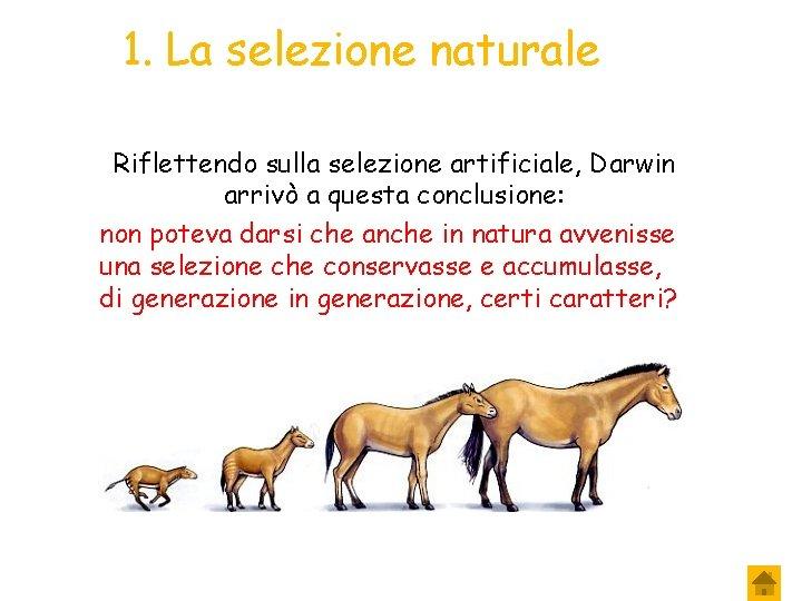 1. La selezione naturale Riflettendo sulla selezione artificiale, Darwin arrivò a questa conclusione: non