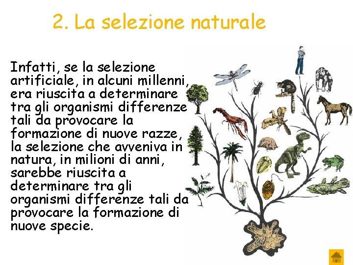 2. La selezione naturale Infatti, se la selezione artificiale, in alcuni millenni, era riuscita