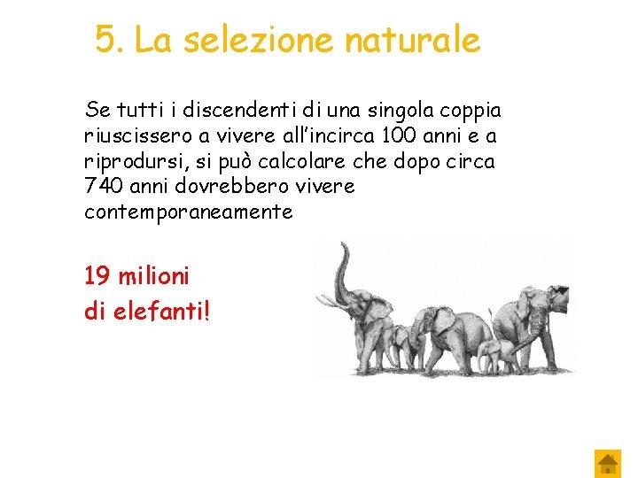 5. La selezione naturale Se tutti i discendenti di una singola coppia riuscissero a