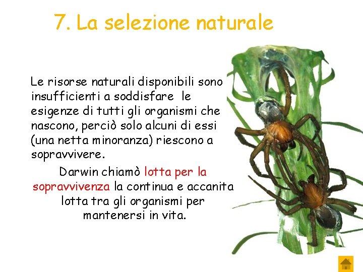 7. La selezione naturale Le risorse naturali disponibili sono insufficienti a soddisfare le esigenze
