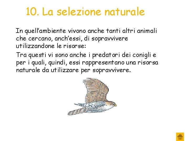 10. La selezione naturale In quell'ambiente vivono anche tanti altri animali che cercano, anch'essi,