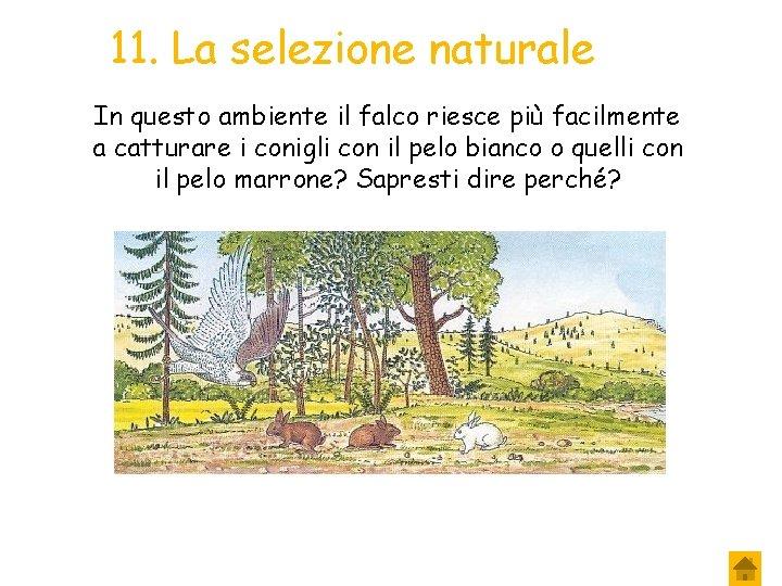 11. La selezione naturale In questo ambiente il falco riesce più facilmente a catturare