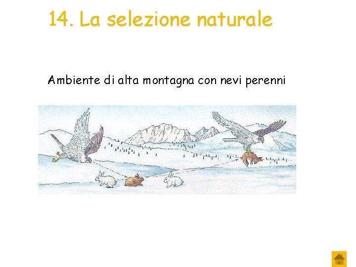 14. La selezione naturale Ambiente di alta montagna con nevi perenni