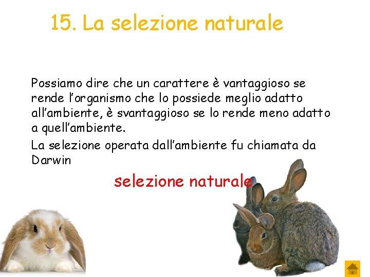 15. La selezione naturale Possiamo dire che un carattere è vantaggioso se rende l'organismo