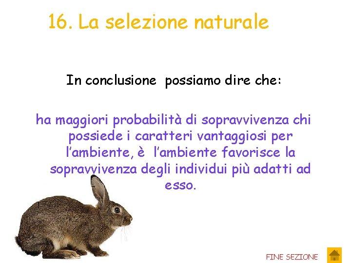 16. La selezione naturale In conclusione possiamo dire che: ha maggiori probabilità di sopravvivenza
