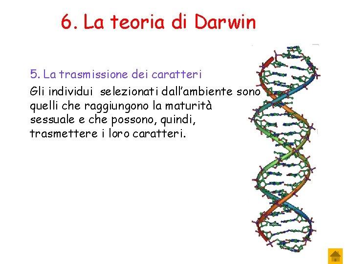 6. La teoria di Darwin 5. La trasmissione dei caratteri Gli individui selezionati dall'ambiente