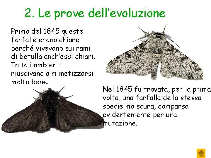 2. Le prove dell'evoluzione Prima del 1845 queste farfalle erano chiare perché vivevano sui