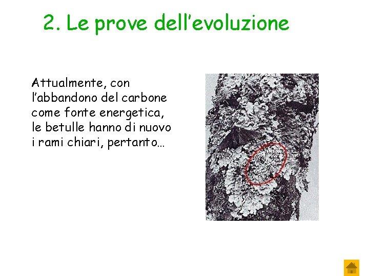 2. Le prove dell'evoluzione Attualmente, con l'abbandono del carbone come fonte energetica, le betulle