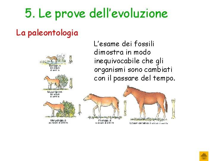 5. Le prove dell'evoluzione La paleontologia L'esame dei fossili dimostra in modo inequivocabile che