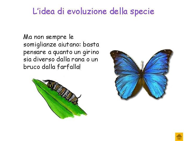 L'idea di evoluzione della specie Ma non sempre le somiglianze aiutano: basta pensare a