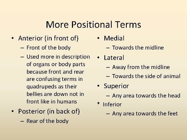 More Positional Terms • Anterior (in front of) – Front of the body –