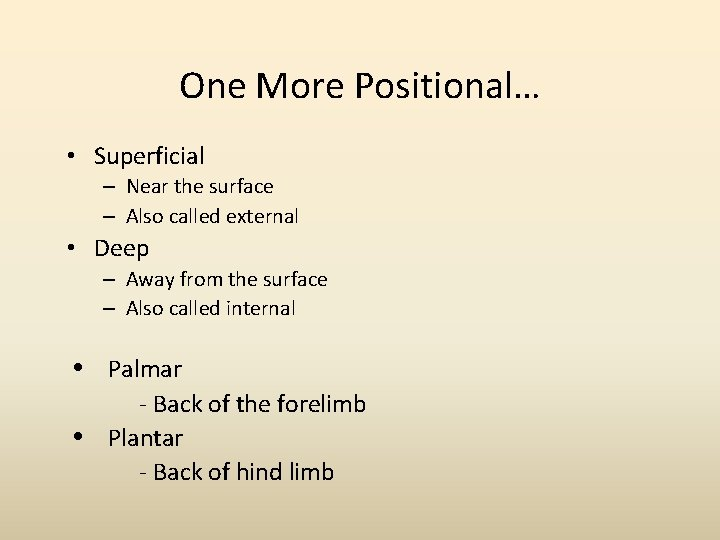 One More Positional… • Superficial – Near the surface – Also called external •