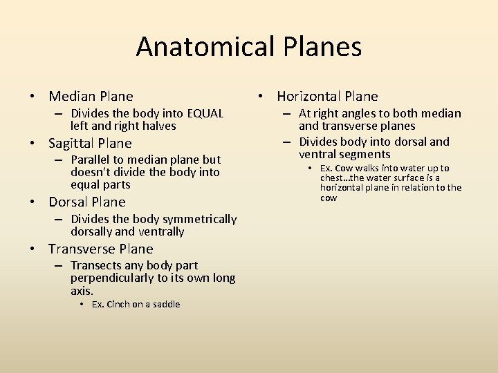 Anatomical Planes • Median Plane – Divides the body into EQUAL left and right