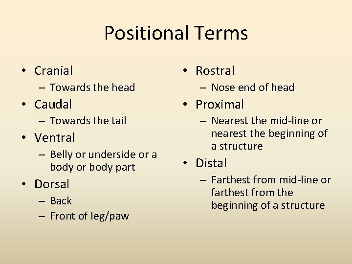 Positional Terms • Cranial – Towards the head • Caudal – Towards the tail