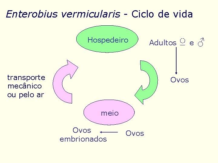 enterobius vermicularis reproducao)