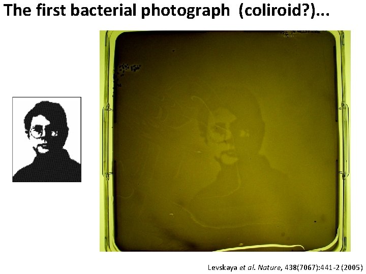 The first bacterial photograph (coliroid? ). . . Levskaya et al. Nature, 438(7067): 441