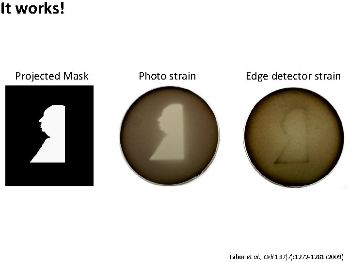 It works! Projected Mask Photo strain Edge detector strain Tabor et al. , Cell