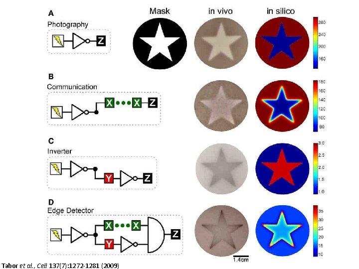 Tabor et al. , Cell 137(7): 1272 -1281 (2009)