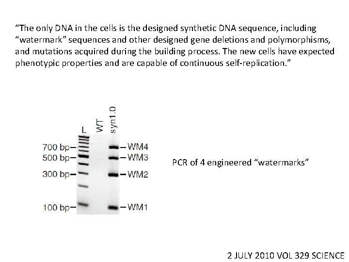 """""""The only DNA in the cells is the designed synthetic DNA sequence, including """"watermark"""""""
