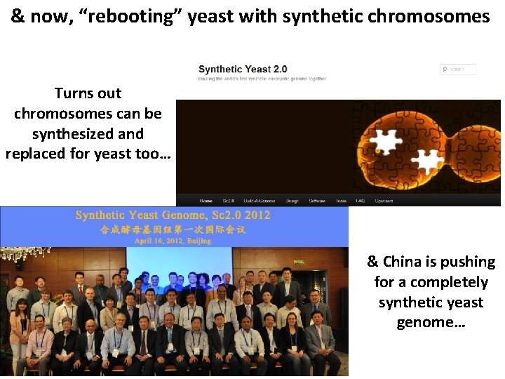 """& now, """"rebooting"""" yeast with synthetic chromosomes Turns out chromosomes can be synthesized and"""