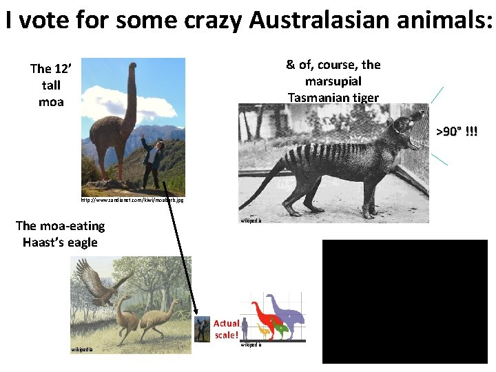 I vote for some crazy Australasian animals: & of, course, the marsupial Tasmanian tiger