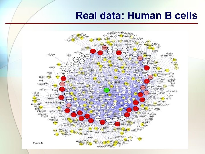 Real data: Human B cells