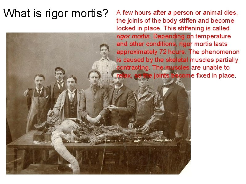 What is rigor mortis? A few hours after a person or animal dies, the