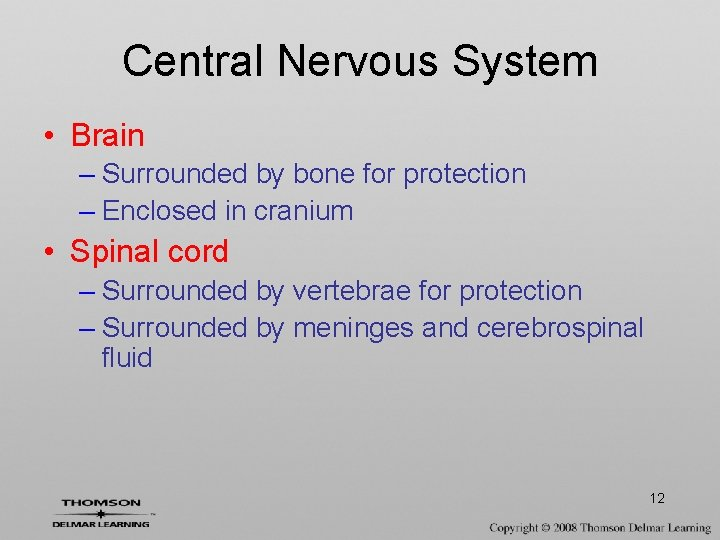 Central Nervous System • Brain – Surrounded by bone for protection – Enclosed in