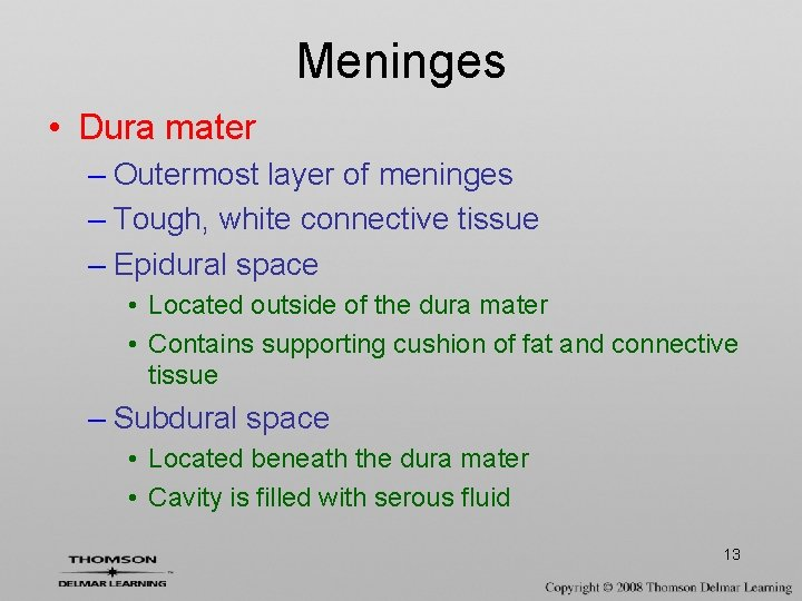 Meninges • Dura mater – Outermost layer of meninges – Tough, white connective tissue