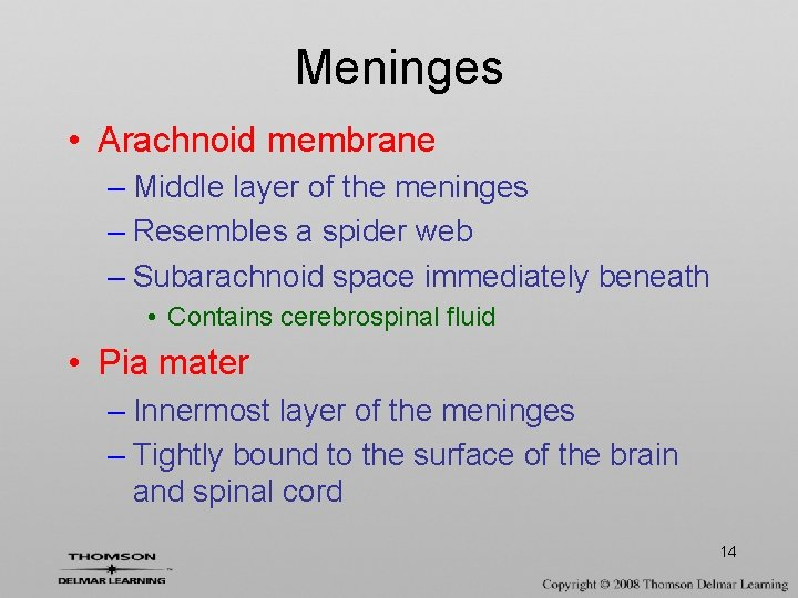 Meninges • Arachnoid membrane – Middle layer of the meninges – Resembles a spider