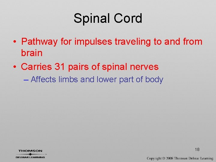 Spinal Cord • Pathway for impulses traveling to and from brain • Carries 31