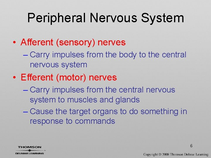 Peripheral Nervous System • Afferent (sensory) nerves – Carry impulses from the body to