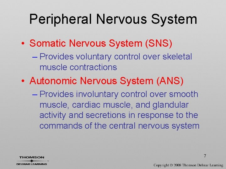 Peripheral Nervous System • Somatic Nervous System (SNS) – Provides voluntary control over skeletal