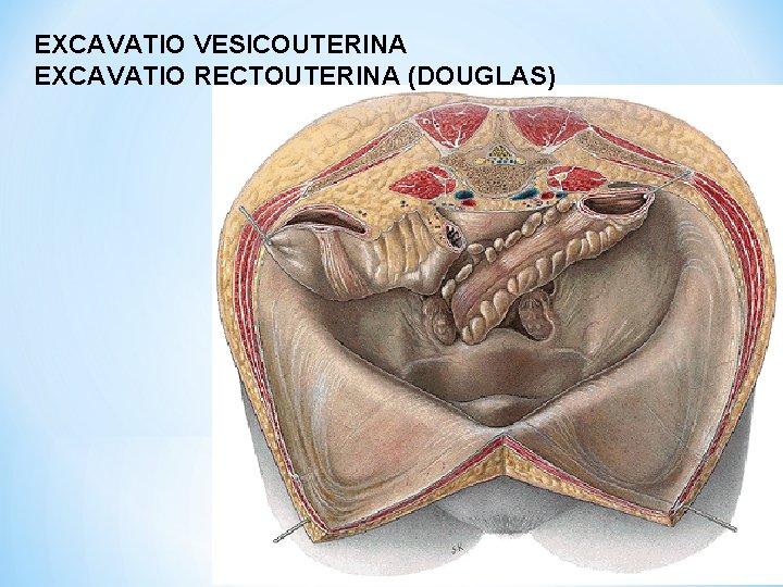 EXCAVATIO VESICOUTERINA EXCAVATIO RECTOUTERINA (DOUGLAS)