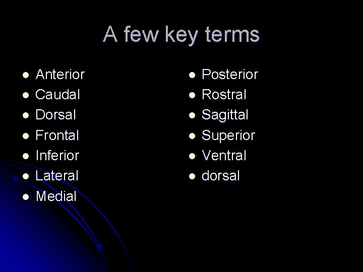 A few key terms l l l l Anterior Caudal Dorsal Frontal Inferior Lateral