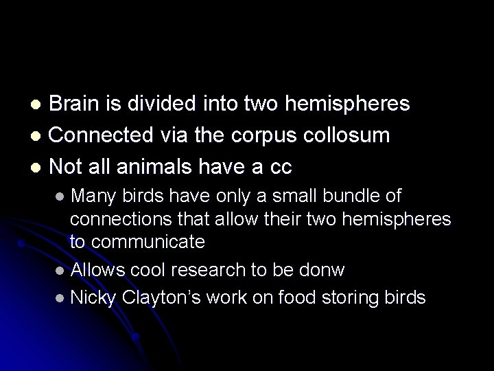 Brain is divided into two hemispheres l Connected via the corpus collosum l Not