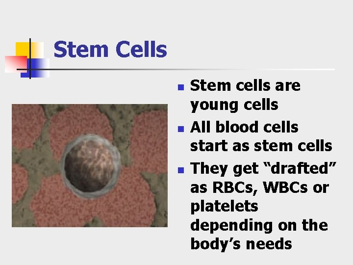 Stem Cells n n n Stem cells are young cells All blood cells start