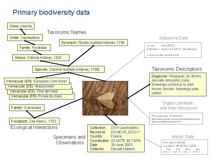 Primary biodiversity data Class: Insecta Taxonomic Names Order: Lepidoptera Sequence Data Synonym: Pyralis nubilalis