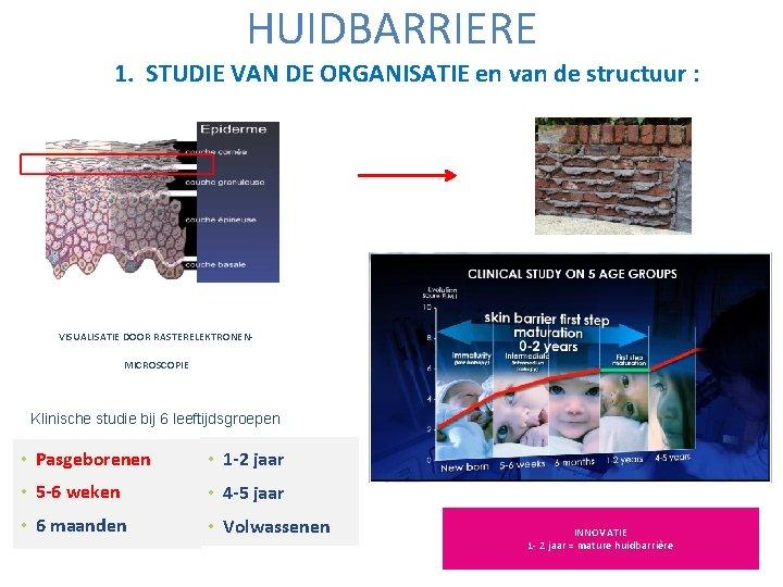 HUIDBARRIERE 1. STUDIE VAN DE ORGANISATIE en van de structuur : VISUALISATIE DOOR RASTERELEKTRONENMICROSCOPIE
