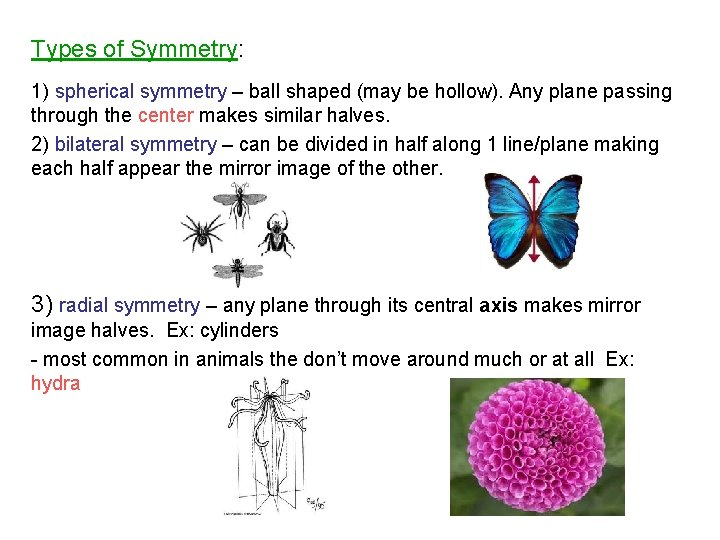 Types of Symmetry: 1) spherical symmetry – ball shaped (may be hollow). Any plane