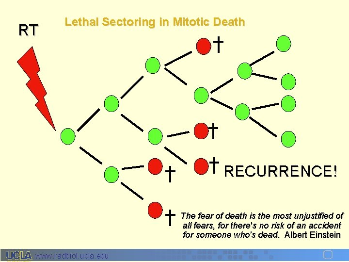 RT Lethal Sectoring in Mitotic Death RECURRENCE! The fear of death is the most