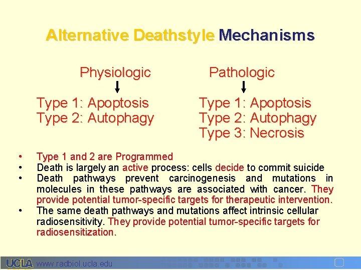 Alternative Deathstyle Mechanisms Physiologic Type 1: Apoptosis Type 2: Autophagy • • Pathologic Type