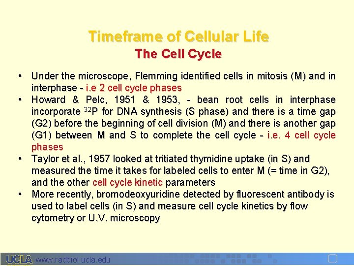 Timeframe of Cellular Life The Cell Cycle • Under the microscope, Flemming identified cells
