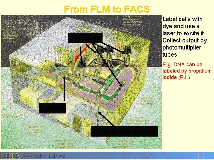 From FLM to FACS PM tubes Label cells with dye and use a laser