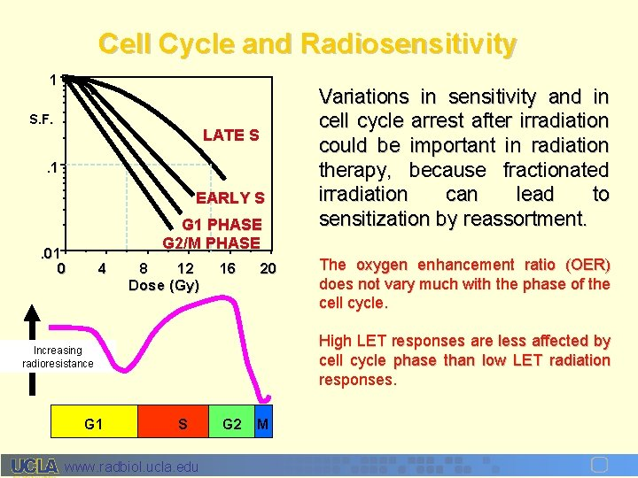 Cell Cycle and Radiosensitivity 1 S. F. LATE S . 1 EARLY S G