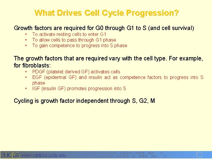 What Drives Cell Cycle Progression? Growth factors are required for G 0 through G