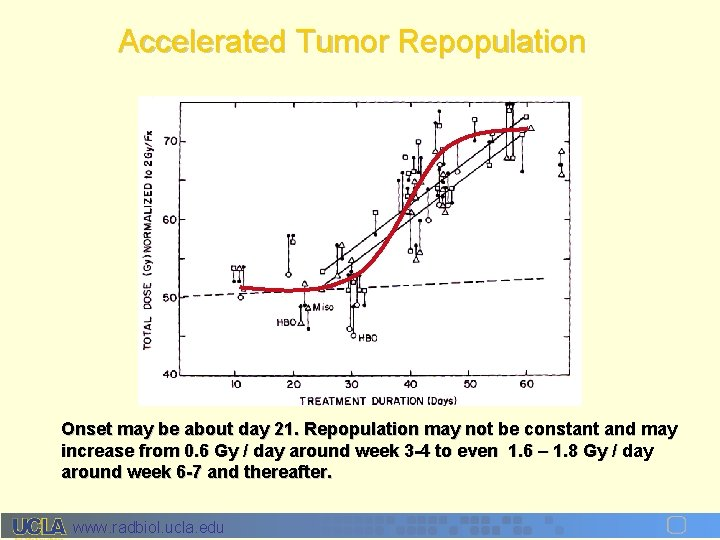 Accelerated Tumor Repopulation Onset may be about day 21. Repopulation may not be constant