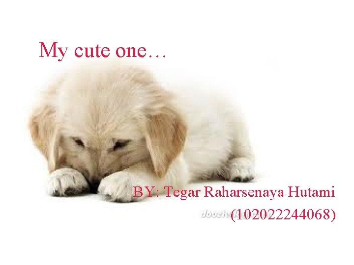 My cute one… BY: Tegar Raharsenaya Hutami (102022244068)