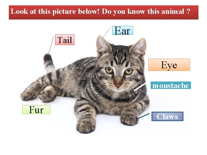 Look at this picture below! Do you know this animal ? Tail Ear Eye