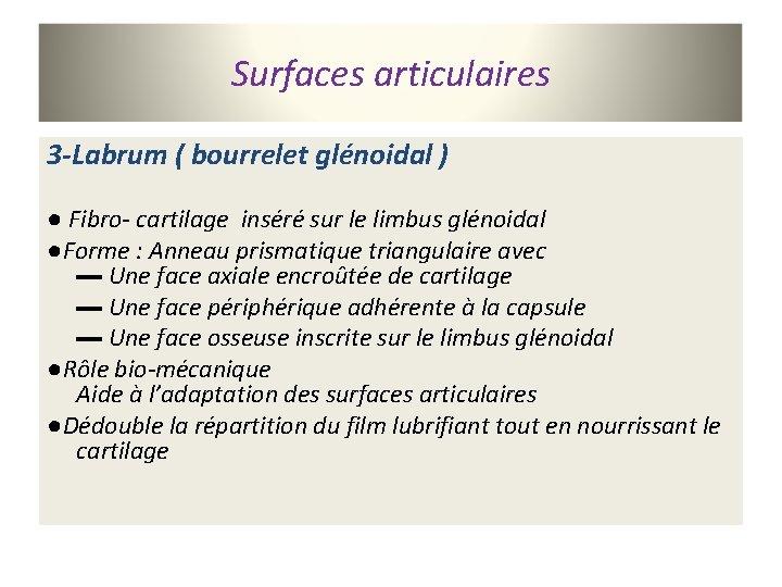 Surfaces articulaires 3 -Labrum ( bourrelet glénoidal ) ● Fibro- cartilage inséré sur le